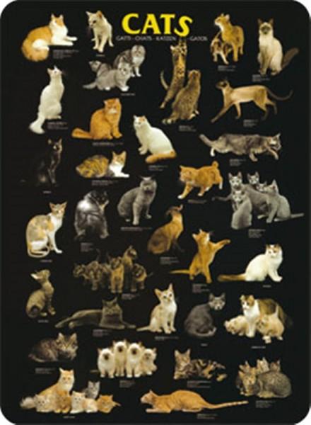 Cats Katzen Collage