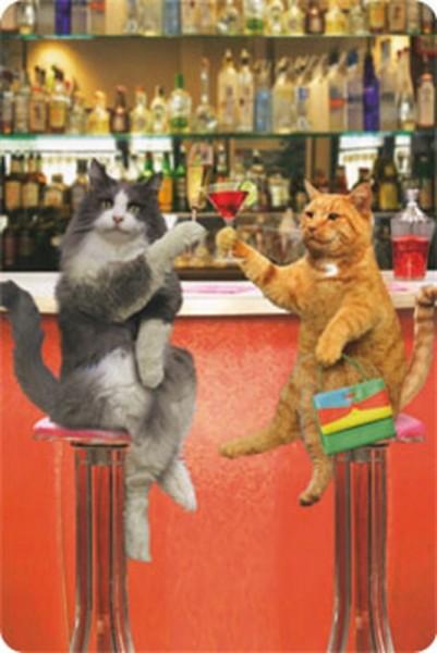 Bar Katzen