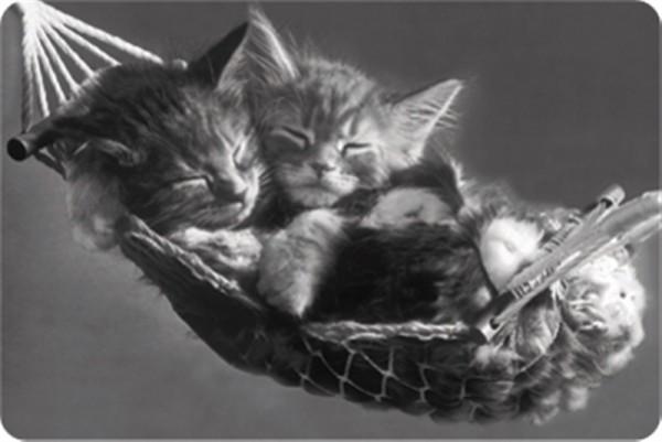 Katzen in Hängematte