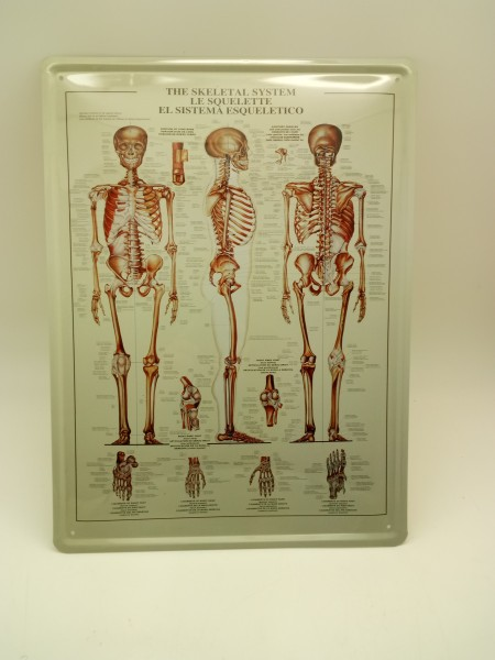 Skeletal System Blechschild