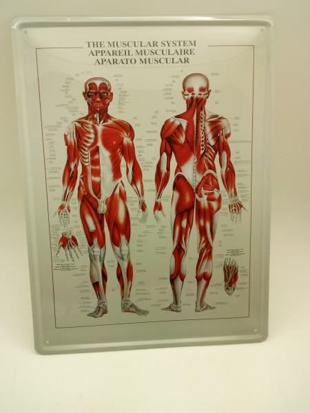 Muscular System Blechschild