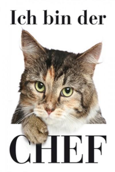 Ich bin der Chef Katze